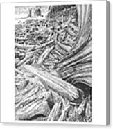 Critter In The Driftwood  Canvas Print