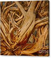 Driftwood Jungle Botany Bay Canvas Print