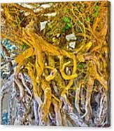 Queen Mariana's Driftwood Canvas Print