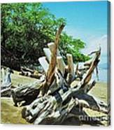 Driftwood On A Maui Beach Canvas Print