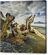 Driftwood On Rialto Beach Canvas Print