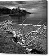 Driftwood On The Shore Near Wawa Ontario Canada Canvas Print