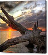 Driftwood Sunset Canvas Print