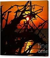 Driftwood Tangle Canvas Print