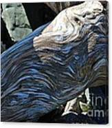 Driftwood Texture And Shadows Canvas Print