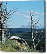 Gnarled Trees And Divide Mountain Canvas Print