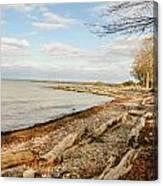 Driftwood On Shore Canvas Print
