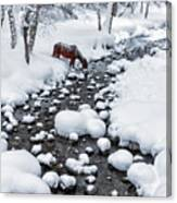 Drinking In Snow Canvas Print