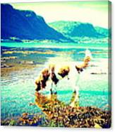 Springer Spaniel Drinking Water From The Big Blue Sea  Canvas Print