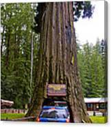 Drive Through Redwood Tree Canvas Print