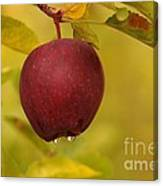 Droplets From A Red Apple   Canvas Print