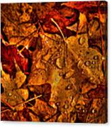 Droplets Of Autumn Canvas Print