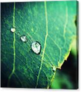 Drops Of Joy Canvas Print