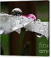 Drops Of Life Canvas Print