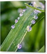 Drops On Grass Canvas Print
