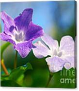 Drops On Violets Canvas Print