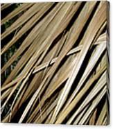 Dry Palm Leaves Canvas Print