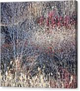 Dry Grasses And Bare Trees Canvas Print