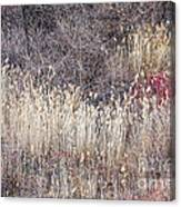 Dry Grasses And Bare Trees In Winter Forest Canvas Print