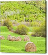 Dry Hay Bales In Spring Farm Field Maine Canvas Print