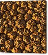 Dry Lakebed, Nevada Canvas Print