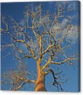 dry season in Madagascar Canvas Print