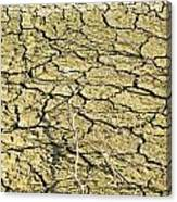 Dry Soil In Lake Bottom During Dryness Canvas Print