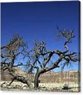 Dry Solitary Tree  Canvas Print