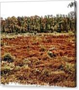 Dry Swamp Canvas Print