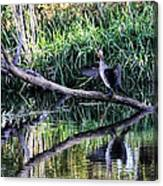 drying cormorant- Black bird sitting on log over water Canvas Print