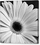 Dsc0056d1-001 Canvas Print