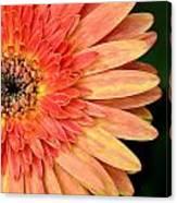 Dsc1484z-001 Canvas Print