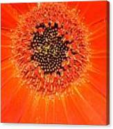 Dsc898d-002 Canvas Print