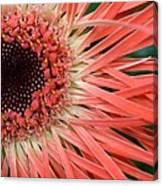 Dsc919d1-001 Canvas Print