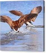 Dual Landing Canvas Print