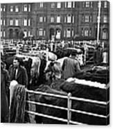 Dublin Cattle Market 1959 Canvas Print