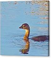 Duck 2133 Canvas Print