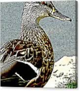 Duck Art Tribal Mallard Canvas Print