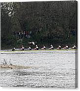 Duck Chasing The Boat Race Canvas Print
