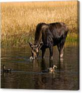 Duck Duck Moose Canvas Print