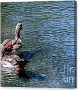 Duck Duck Canvas Print
