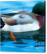 Duck Glide Canvas Print