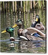 Duck Good Friends 2 Canvas Print