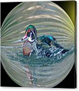 Duck In A Bubble  Canvas Print