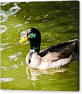 Duck In The Park Canvas Print