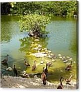Duck Island Canvas Print