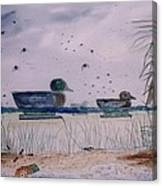 Just Ducks Canvas Print