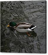 Duck On A River Canvas Print