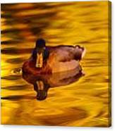 Duck On Golden Water Canvas Print