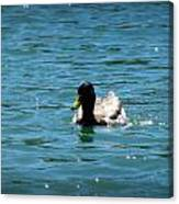 Duck On Sparkling Waters Canvas Print